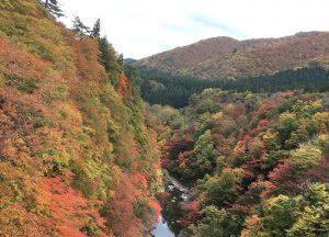 平成最後の秋に日本の紅葉を生まれて初めてちゃんと味わう